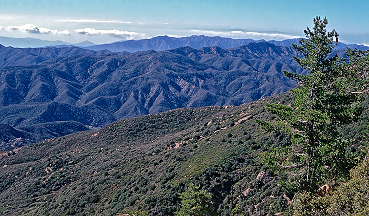 View west from Reyes Peak trail, November 1984