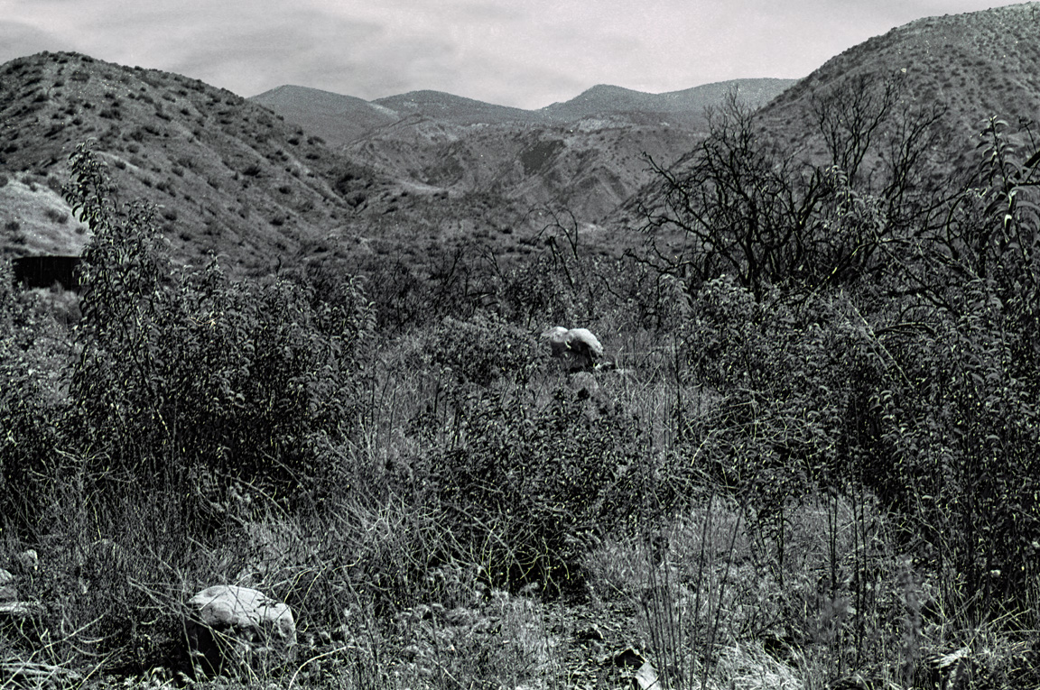 Trail head view up Horn Canyon / Horn Canyon trail to the Topatopa ridge, 1978
